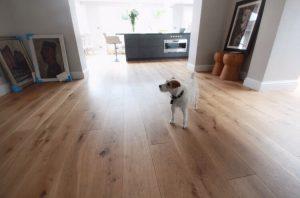Dog in living room on hard wood flooring